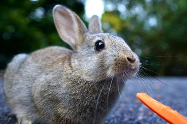 ウサギ全日本不動産協会